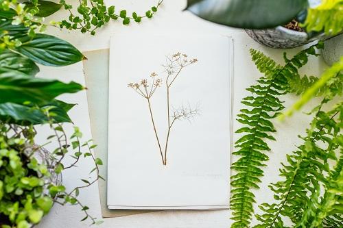 Des cadeaux de naissance personnalisés sur herbarium